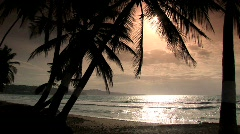 Beach, palms and sun Stock Footage