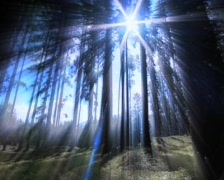 Mystic forest with aureola from the sun Stock Footage