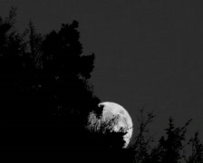 Stock Video Footage of Moonrising in an black/white picture