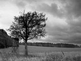 Mystic lonesom tree and huntuinglodge Stock Footage