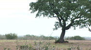 Stock Video Footage of lone tree