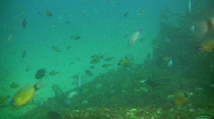 Old sunken ship and fish - stock footage