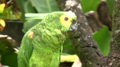 Green Parrot (HD Video) Stock Footage