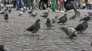 Stock Video Footage of Pigeons dominate the square