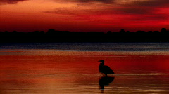 Florida sunset with bird playing in water Stock Footage
