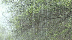 Stock Video Footage of Rain and wind batter branches of tree during rainstorm.