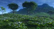 Stock Video Footage of FlowerHill HD 12 2997