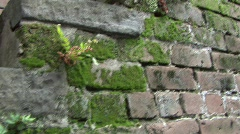 old brick stairsw:moss pan to wall Savanah GA - stock footage
