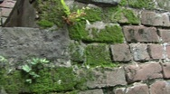 Stock Video Footage of old brick stairsw:moss pan to wall Savanah GA