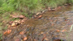 Small stream in Savanha GA Stock Footage