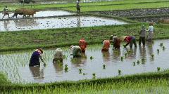 Bali rice field Stock Footage