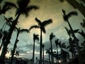 Palm tree timelapse dark sky Stock Footage