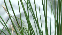 Angeles National Forest 4 shot Wild Grass/Water Rock/Dead Branch/Gra Stock Footage