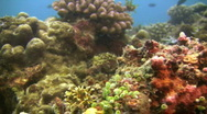 Stock Video Footage of Coral reef in Philippines