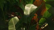 Tropical Garden Stock Footage