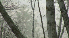 Fog Passing thru Woods Full Zoom- Angeles National Forest - stock footage
