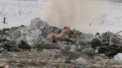 Seagull flock scavaging through garbage dump for food Stock Footage