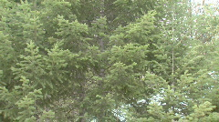Pan from trees to cabin. - stock footage