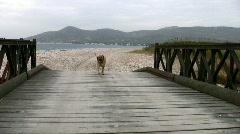 Mastiff dog walking over bridge Stock Footage