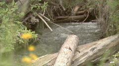 Pretty Creek - stock footage