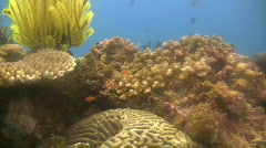 Feather stars, Crinoids on a reef in the Philippines Stock Footage