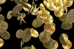 Gold coins falling on black NTSC Stock Footage