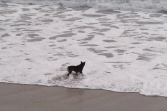 Dog facing the waves Stock Footage