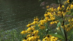 Spring flowers in the breeze on the river bank Stock Footage