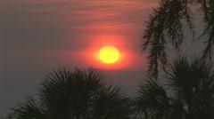 Sunrise over the Atlantic thru palms Stock Footage