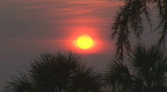 Stock Video Footage of Sunrise over the Atlantic thru palms