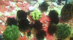 Coral reef in the Philippines Stock Footage