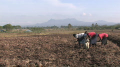 Family plants maize in Kenya, Africa - stock footage