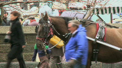 Carriage Horses in New York (3 of 3) Stock Footage