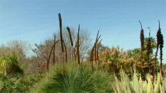 Exotic Desert Garden-Beautiful Colors Pan Left Stock Footage