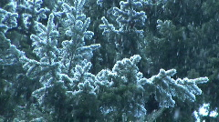 Snow falling on evergreen pine tree branches, slow motion Stock Footage