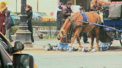 Carriage Horses in New York (2 of 3) Stock Footage