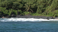 Stock Video Footage of Palm tree near black sand beach HD