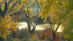 Colorado River behind trees - stock footage