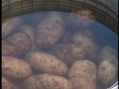 Potatoes in a wire bucket pulled from water Stock Footage