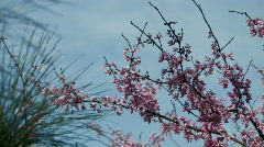 Spring blossoms rustle in breeze Stock Footage