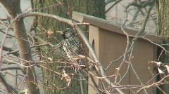 Starling near the bird nest 1 Stock Footage