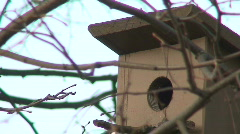 Starling coming from the bird nest 2 Stock Footage