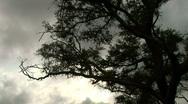 Silhouette tree 1 Stock Footage