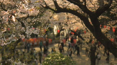 Cherry Blossom festival in Ueno Park in Tokyo Stock Footage
