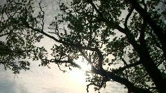 Silhouette tree 2 Stock Footage