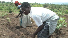 Stock Video Footage of Mother and daughter prepare field for planting in Rwanda