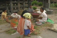 Batak Village 1 Stock Footage