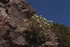 Wildflowers in the spring bloom Stock Footage