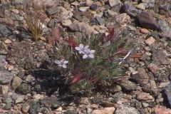 Mini wild desert flora Stock Footage
