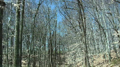 Trees in the woods Stock Footage